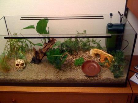 Das Aquarium noch ohne Wasser