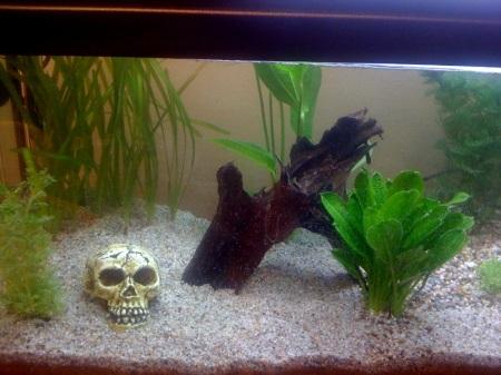 Totenkopf unter Wasser