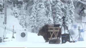 Ein Bär stört die Dreharbeiten zum Werbespot.