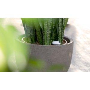 Der Sensor meldet dem iPhone, wann die Pflanze Wasser braucht.