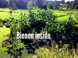 Biene2