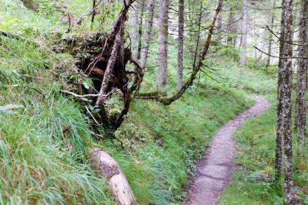 In ein bis zwei Stunden ist der Höllerundweg zu bewältigen.