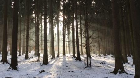 Winterliche Ruhe im Wildpark Poing.