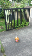Pokemon_4766