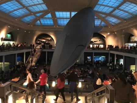 Absolut eindrucksvoll: Ein Wal hängt von der Decke.