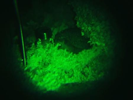 Das Nachtsichtgeräte funktioniert für die Igelbeobachtung ideal.