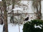 Die Stunde der Wintervögel - große Vogelinventur im Garten.